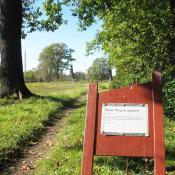 Vorübergehende Wegesperrung an astbruchgefährdeter Alteiche im Park Wiesenburg. © A. von Lührte