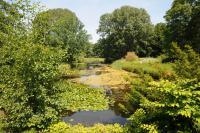 Das Venusbassin im Großen Tiergarten vor der Umgestaltung: artenreiche Uferstauden- und Schwimmblattgesellschaften prägen das Bild © N. A. Klöhn